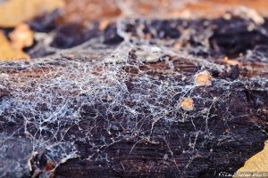 Frosted Spider Webs by Auraomega