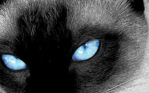 Cat Blue Eyes by cesarvcc