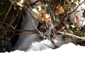 Peek-A-Boo, I See You by marmots
