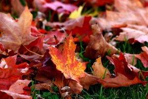 Crunchy Leaves by XxQuothTheRavenxX