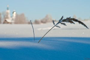 January Grass by Sulde