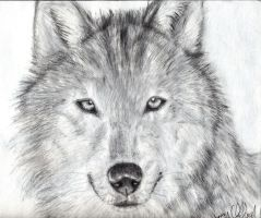 Wolf by Jenrocks4ever