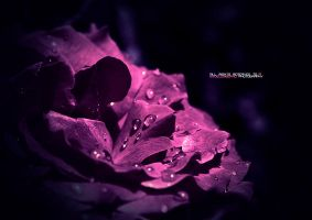 Pure Purple by mydecember90