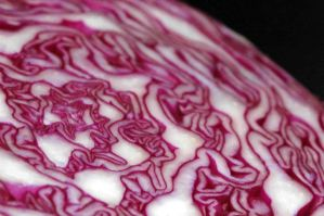 red cabbage by felixartistixcouk