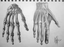 Human Anatomy - Hand by HaloGoddess1
