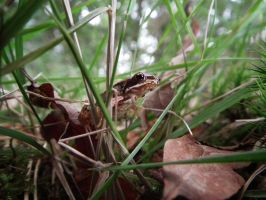 wee frog by harrietbaxter