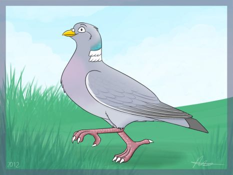 Woodpigeon by Articuno