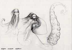 octopus sketches by Icecoldart