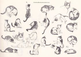 My cat- sketches by ChristinaMandy