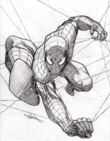 Caught in the Webs Spidey by Dingodile24
