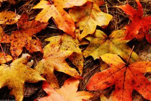 The Fallen by redpandabear97