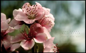 .: The Scent Of A Peach :. by kharax