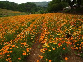 JAPAN STOCK FLOWER PLANT NO:040030044 by hirolus