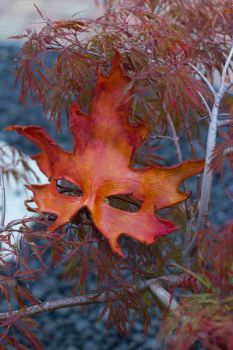 Autumn Silver Maple Leather Mask by OsborneArts
