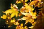 Autumn Glory by lostNmelacholywinter