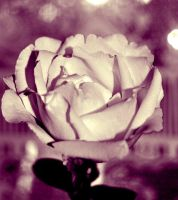 rose 07 by glad2626
