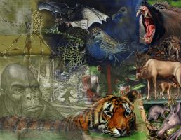 Animal collage by marcgosselin