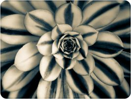 Symmetry of Nature by myrnajacobs