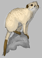 Layla the Meerkat - Realistic - SHADED by 3933911