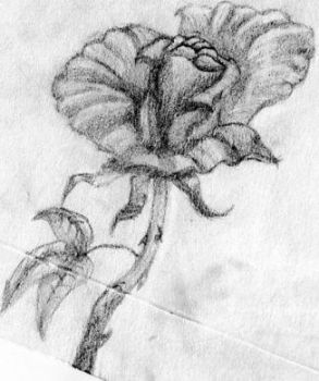 Our rose... by eZkiZo