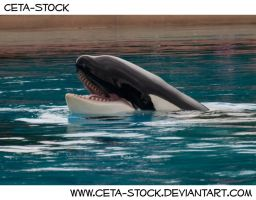 Orca 3 by Ceta-Stock