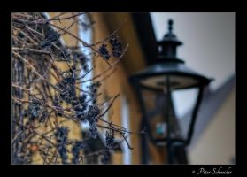 September late. by Phototubby