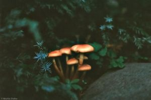 'Shrooms by craze4ble