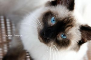Guss by TayMcKayPhotography