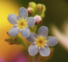 Forget Me by PasswordProtected