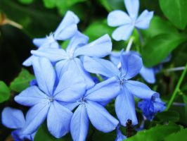 Blue Flower by TheOrdinary