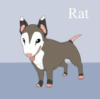 Meet- Rat the BullTerrier by Fyuvix