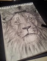 Lion by sophicardia