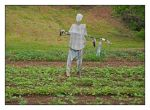 Scarecrow.DSCN2191, with story by harrietsfriend