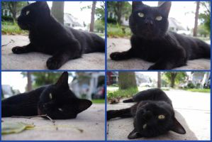Playful Black Cat by EdibleRainbows