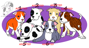 Pit Bull Litter - CLOSED by Smigolson