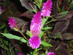 Purple flower with flash by Jujut8