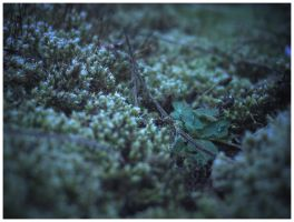mossy knoll by madFusion15