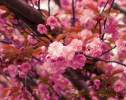 Sea Of Blossoms Detail by konspix