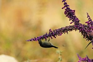 Bird on flower by yasminstock