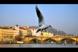 Prague wings by tomsumartin