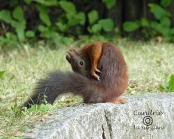 Squirrel 121 by Cundrie-la-Surziere