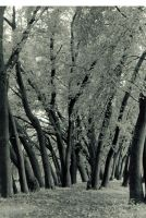 wet trees by minorinfluence05