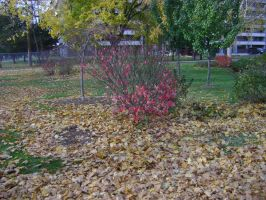 Canadian Fall Colours 63 by Aswang301