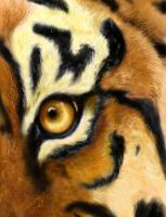 Tiger by artist--in--progress