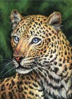 Chinese leopard by Bisanti
