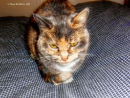 A Cat Named Peaches by jim88bro