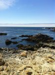 Monterey by AngelaHolmesStock