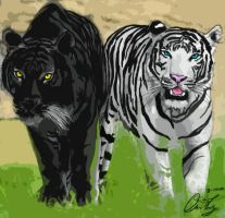 Two Tigers by Tigerrwar
