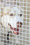 East Valley Animal Shelter 11 by Deliquesce-Flux