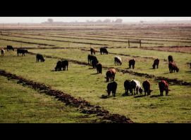 Cattle Country by roamingtigress